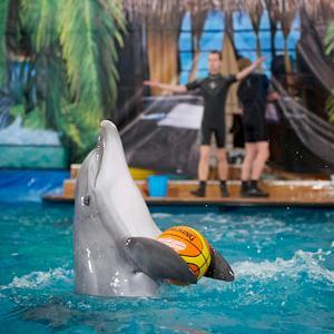 Дельфинарии, океанариумы Староминской