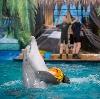 Дельфинарии, океанариумы в Староминской