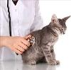 Ветеринарные клиники в Староминской